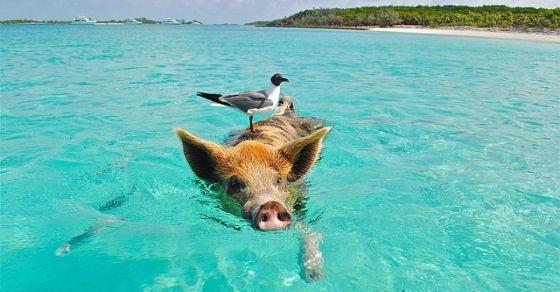 Bahamy ciekawe miejsca