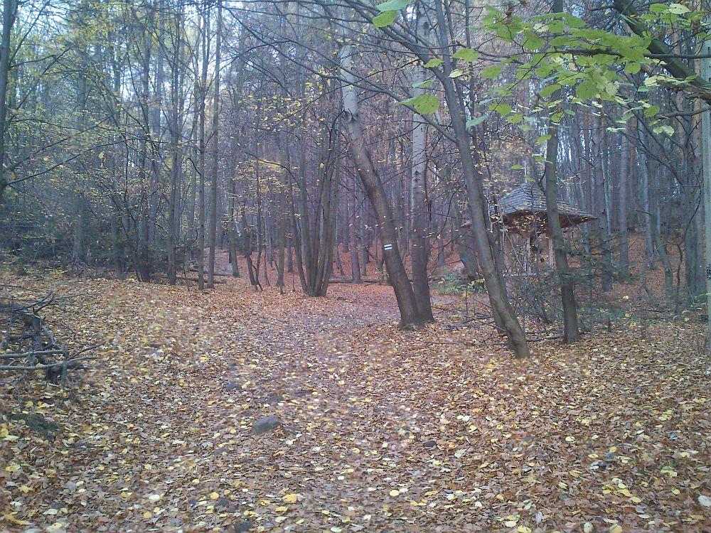 swietokrzyski-park-narodowy2